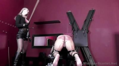 Mistress Scarlet: Show Me What You Will Take For Me Domina Scarlet
